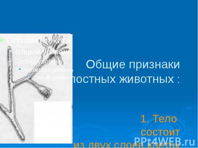Общие признаки кишечнополостных животных : 1. Тело состоит из двух слоев клеток