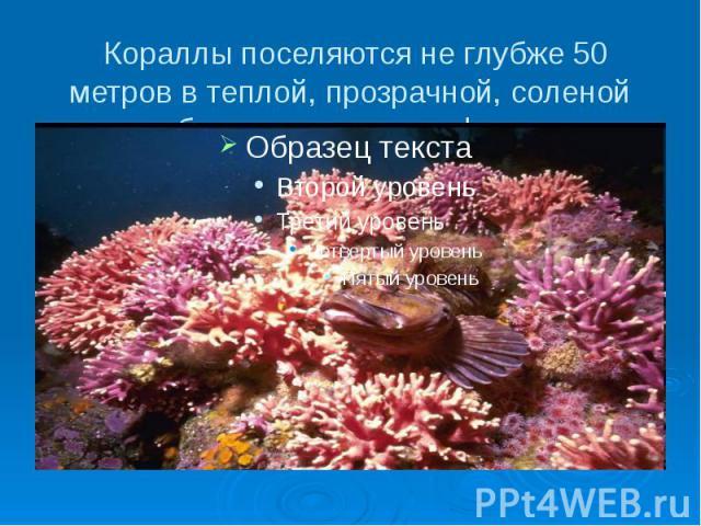 Кораллы поселяются не глубже 50 метров в теплой, прозрачной, соленой воде, образуя колонии, рифы, острова.