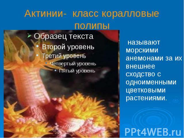 Актинии- класс коралловые полипы