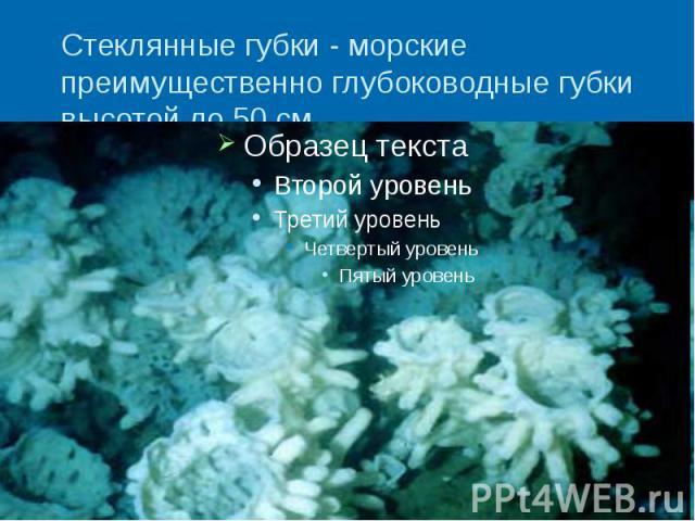 Стеклянные губки - морские преимущественно глубоководные губки высотой до 50 см.