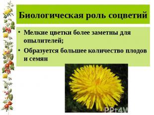 Биологическая роль соцветий Мелкие цветки более заметны для опылителей; Образует