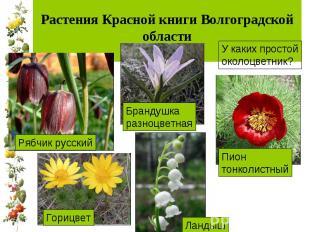 Растения Красной книги Волгоградской области