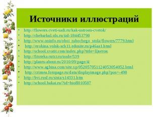 Источники иллюстраций http://flowers.cveti-sadi.ru/kak-ustroen-cvetok/ http://ch