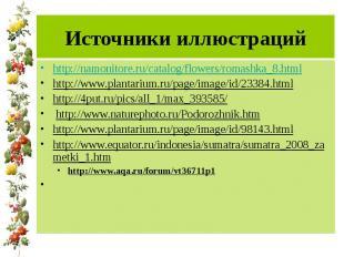 Источники иллюстраций http://namonitore.ru/catalog/flowers/romashka_8.html http: