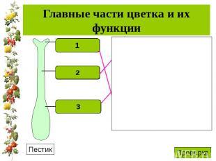 Главные части цветка и их функции