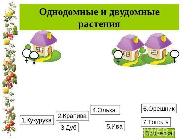 Однодомные и двудомные растения