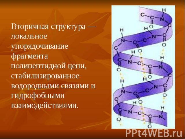Вторичная структура — локальное упорядочивание фрагмента полипептидной цепи, стабилизированное водородными связями и гидрофобными взаимодействиями.