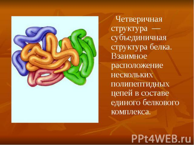 Четверичная структура — субъединичная структура белка. Взаимное расположение нескольких полипептидных цепей в составе единого белкового комплекса. Четверичная структура — субъединичная структура белка. Взаимное расположение нескольких полипептидных …