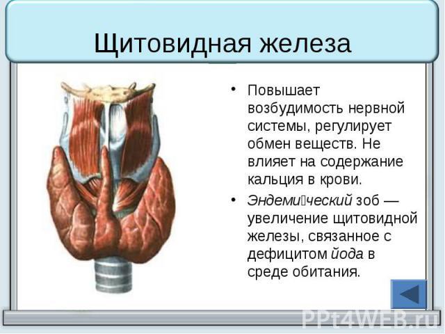 Щитовидная железа Повышает возбудимость нервной системы, регулирует обмен веществ. Не влияет на содержание кальция в крови. Эндеми ческий зоб— увеличение щитовидной железы, связанное с дефицитом йода в среде обитания.