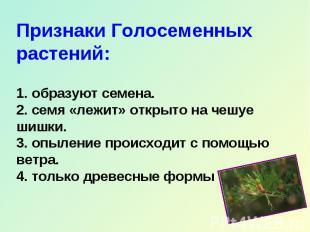 Признаки Голосеменных растений: 1. образуют семена. 2. семя «лежит» открыто на ч
