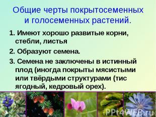 Общие черты покрытосеменных и голосеменных растений. 1. Имеют хорошо развитые ко