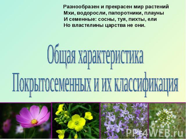 Разнообразен и прекрасен мир растений Мхи, водоросли, папоротники, плауны И семенные: сосны, туя, пихты, ели Но властелины царства не они.