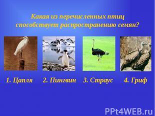 Какая из перечисленных птиц способствует распространению семян?