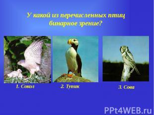 У какой из перечисленных птиц бинарное зрение?
