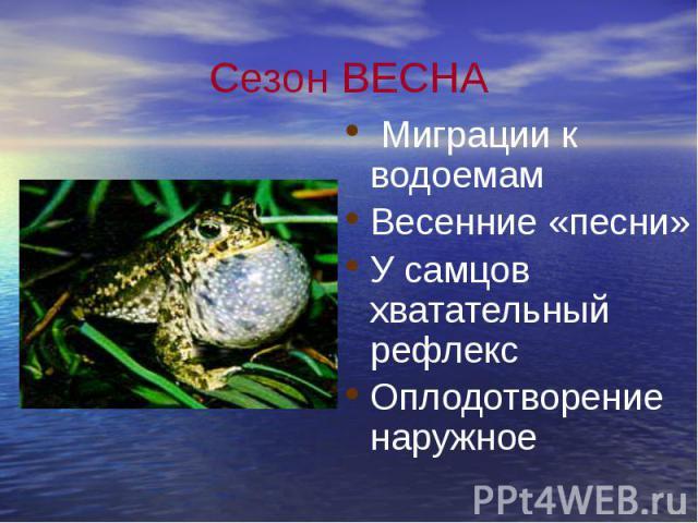 Сезон ВЕСНА Миграции к водоемам Весенние «песни» У самцов хватательный рефлекс Оплодотворение наружное