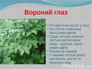 Вороний глаз Это растение растет в лесу На стебле 4 овальных листа ниже цветка С