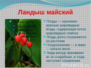 Ландыш майский Плоды — оранжево-красные шаровидные ягоды, содержащая почти шаров