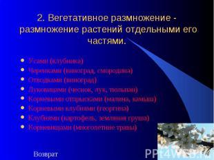 2. Вегетативное размножение - размножение растений отдельными его частями. Усами