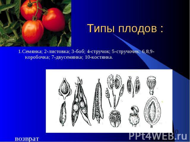 Типы плодов : 1.Семянка; 2-листовка; 3-боб; 4-стручок; 5-стручочек; 6,8,9-коробочка; 7-двусемянка; 10-костянка.