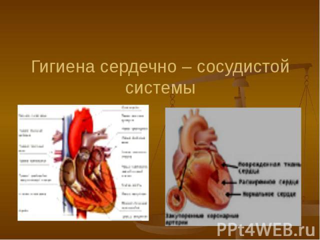 Гигиена сердечно – сосудистой системы