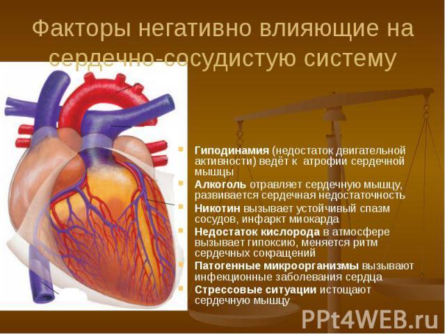 Факторы негативно влияющие на сердечно-сосудистую систему Гиподинамия (недостаток двигательной активности) ведёт к атрофии сердечной мышцы Алкоголь отравляет сердечную мышцу, развивается сердечная недостаточность Никотин вызывает устойчивый спазм со…