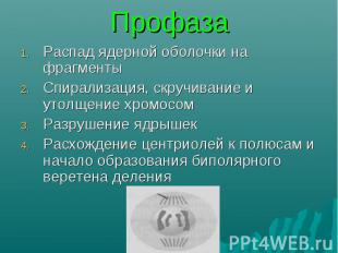 Распад ядерной оболочки на фрагменты Распад ядерной оболочки на фрагменты Спирал