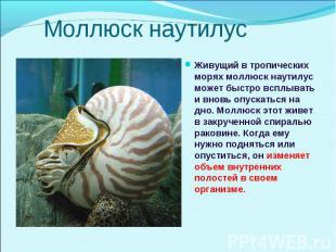 Живущий в тропических морях моллюск наутилус может быстро всплывать и вновь опус