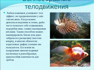 Рыбьи плавники усиливают этот эффект, но предназначение у них совсем иное. Когда