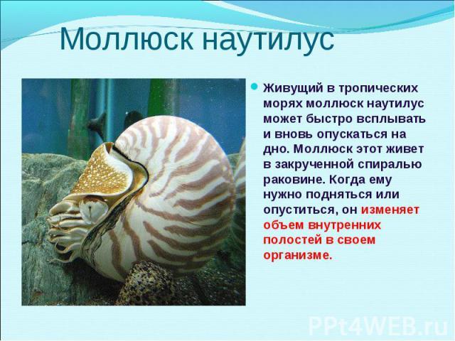 Живущий в тропических морях моллюск наутилус может быстро всплывать и вновь опускаться на дно. Моллюск этот живет в закрученной спиралью раковине. Когда ему нужно подняться или опуститься, он изменяет объем внутренних полостей в своем организме. Жив…