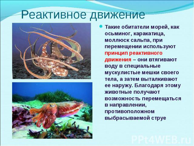 Такие обитатели морей, как осьминог, каракатица, моллюск сальпа, при перемещении используют принцип реактивного движения – они втягивают воду в специальные мускулистые мешки своего тела, а затем выталкивают ее наружу. Благодаря этому животные получа…