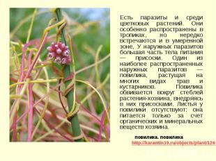 Есть паразиты и среди цветковых растений. Они особенно распространены в тропиках