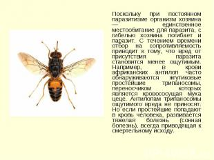 Поскольку при постоянном паразитизме организм хозяина — единственное местообитан