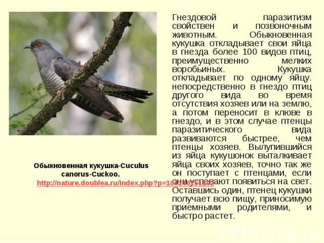 Гнездовой паразитизм свойствен и позвоночным животным. Обыкновенная кукушка откладывает свои яйца в гнезда более 100 видов птиц, преимущественно мелких воробьиных. Кукушка откладывает по одному яйцу. непосредственно в гнездо птиц другого вида во вре…