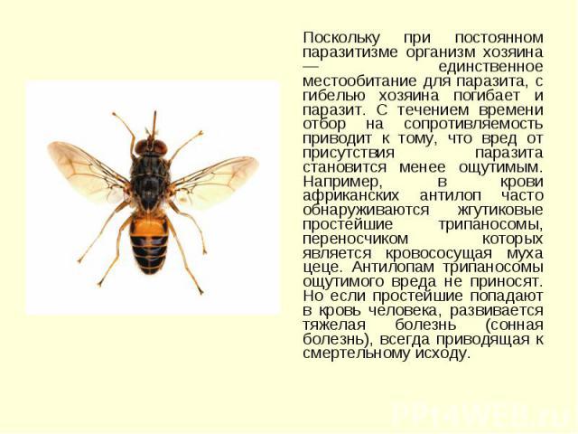 Поскольку при постоянном паразитизме организм хозяина — единственное местообитание для паразита, с гибелью хозяина погибает и паразит. С течением времени отбор на сопротивляемость приводит к тому, что вред от присутствия паразита становится менее ощ…