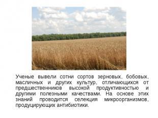 Ученые вывели сотни сортов зерновых, бобовых, масличных и других культур, отлича