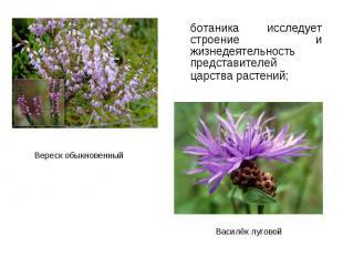ботаника исследует строение и жизнедеятельность представителей царства растений;