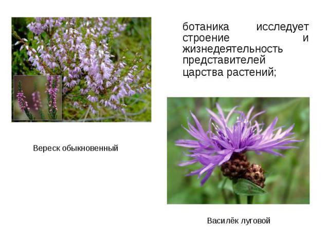 ботаника исследует строение и жизнедеятельность представителей царства растений; ботаника исследует строение и жизнедеятельность представителей царства растений;