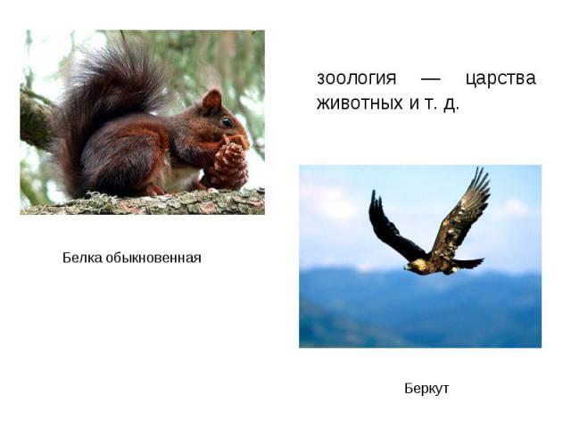 зоология — царства животных и т. д. зоология — царства животных и т. д.