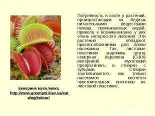 Потребность в азоте у растений, произрастающих на бедных питательными веществами