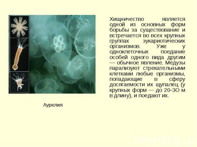 Хищничество является одной из основных форм борьбы за существование и встречается во всех крупных группах эукариотических организмов. Уже у одноклеточных поедание особей одного вида другим — обычное явление. Медузы парализуют стрекательными клетками…