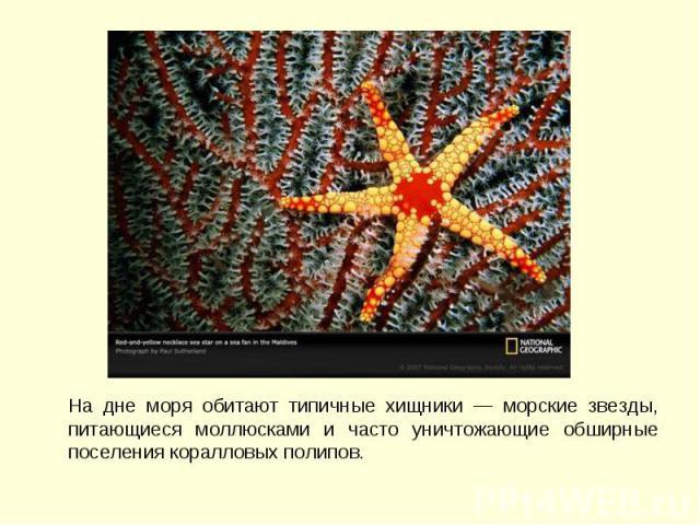 На дне моря обитают типичные хищники — морские звезды, питающиеся моллюсками и часто уничтожающие обширные поселения коралловых полипов. На дне моря обитают типичные хищники — морские звезды, питающиеся моллюсками и часто уничтожающие обширные посел…
