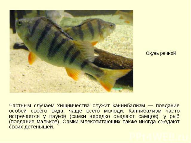 Частным случаем хищничества служит каннибализм — поедание особей своего вида, чаще всего молоди. Каннибализм часто встречается у пауков (самки нередко съедают самцов), у рыб (поедание мальков). Самки млекопитающих также иногда съедают своих детеныше…