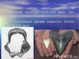 Первые следы акул находят в девонском периоде (320-265 млн. лет назад. Первые сл