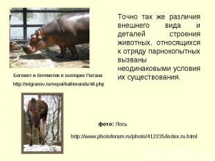 Точно так же различия внешнего вида и деталей строения животных, относящихся к о
