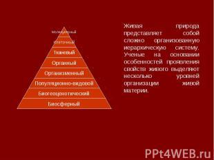 Живая природа представляет собой сложно организованную иерархическую систему. Уч