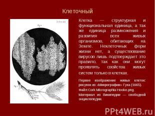 Клетка — структурная и функциональная единица, а так же единица размножения и ра