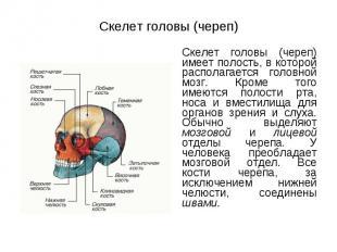 Скелет головы (череп) имеет полость, в которой располагается головной мозг. Кром
