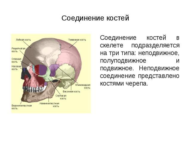 Соединение костей в скелете подразделяется на три типа: неподвижное, полуподвижное и подвижное. Неподвижное соединение представлено костями черепа. Соединение костей в скелете подразделяется на три типа: неподвижное, полуподвижное и подвижное. Непод…