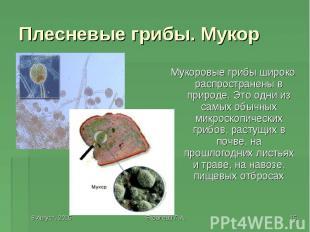 Мукоровые грибы широко распространены в природе. Это одни из самых обычных микро