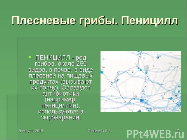 ПЕНИЦИЛЛ - род грибов, около 250 видов, в почве, в виде плесеней на пищевых продуктах (вызывают их порчу). Образуют антибиотики (например, пенициллин), используются в сыроварении.